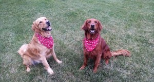 Rowdy-and-Amber-our-Golden-Greeters-IMG_246831446192987-(2)